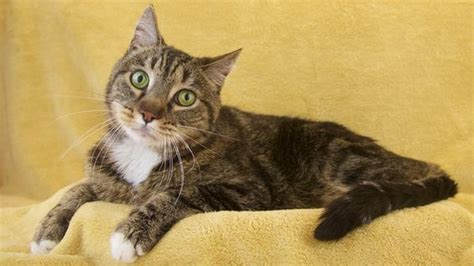 how long does a cat live with hyperthyroidism