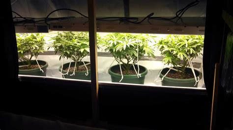 fluorescent lights for growing plants how many plants to maximize grow space grow weed easy