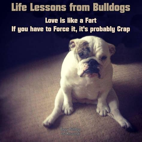 Bulldog Meme - 85 best images about bulldog memes on pinterest funny puppies funny and your dog