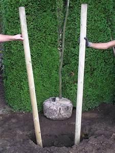 Baum Pflanzen Anleitung : wie pflanze ich einen apfelbaum wie schneide ich einen jungen apfelbaum youtube obstbaum ~ Frokenaadalensverden.com Haus und Dekorationen