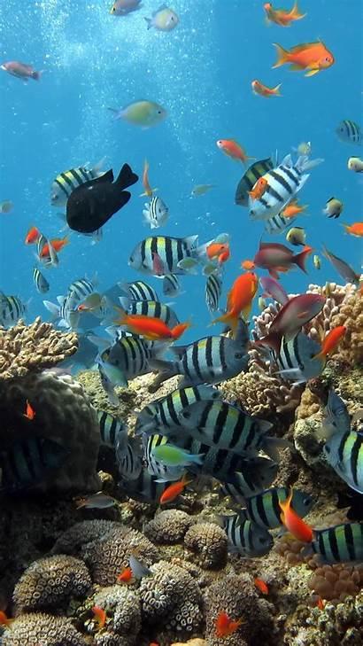 Underwater Ocean Fish Iphone Sea Water Under
