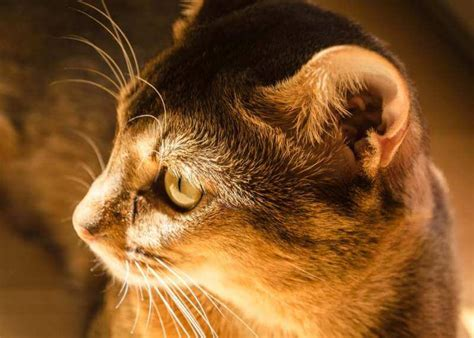 ear cats cat problems mites brown ears inside cure why health tips philosophy self help animal pockets slits read types