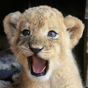 Happy Animal Images | www.pixshark.com - Images Galleries ...