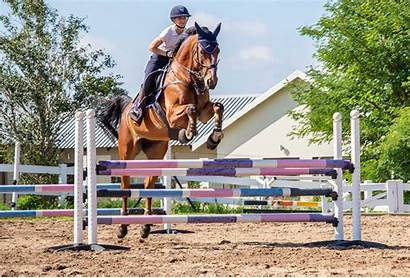 Jumping Grids Horse Technique