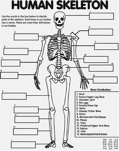 Coloring Skeleton Pages Human Anatomy Printable