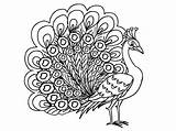 Peacock Coloring Female Outline Peahen Pages Printable Drawing Kidsplaycolor Peacocks Animal Glass Painting Feathers Peafowl Getdrawings Colors Coloringstar sketch template