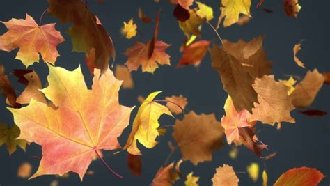 Falling Leaves Live Fall Backgrounds by Falling Leaf Loopable Background High Quality Animated