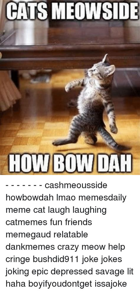 Laughing Cat Meme 25 Best Memes About Cat Laughing Cat Laughing Memes