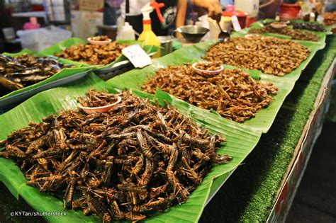 insecte cuisine fried insects phuket food and guide