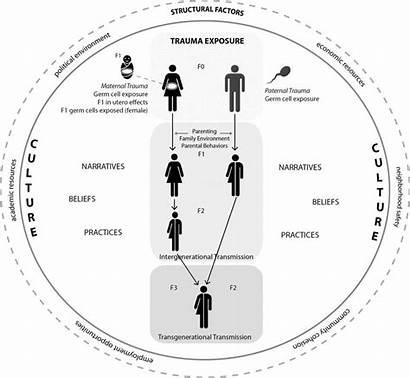 Trauma Intergenerational Transmission Effects Biological Diagram