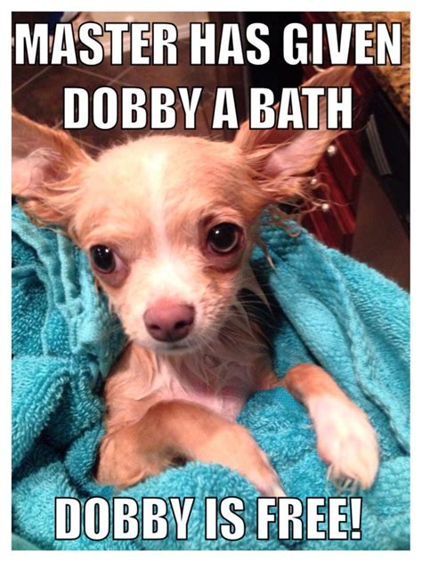 Funny Chihuahua Memes - funny puppy meme love the harry potter reference cute puppies pinterest funny funny