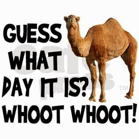 Happy Hump Day Memes - best 25 happy hump day meme ideas on pinterest hump day pictures wednesday hump day and