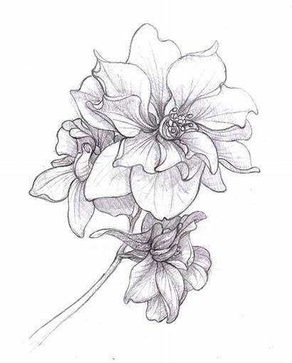 Larkspur Flowers Flower Birth Tattoo Drawing Sketch