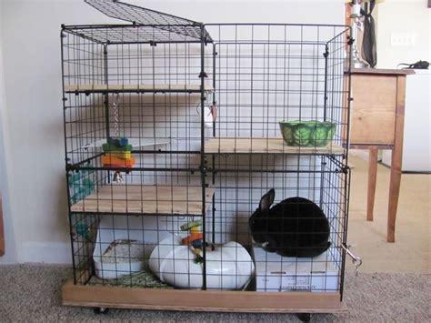Coniglio In Gabbia - gabbia per conigli conigli caratteristiche delle