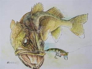 Walleye lure stinger by chuckwhat on DeviantArt