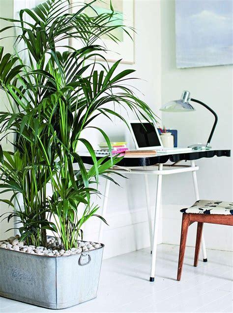 comment humidifier l air d une chambre pour assainir l air de votre maison pensez aux plantes