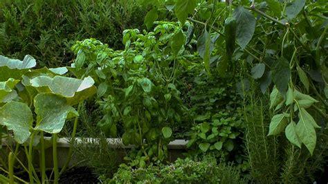 Basilikum Gartennatur