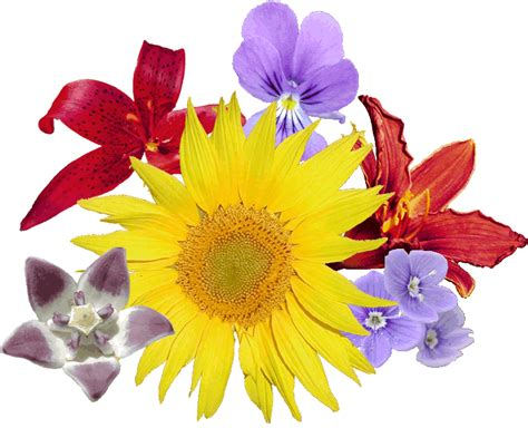 Bestandbouquet Fleurs Png