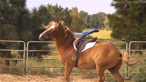 horses types