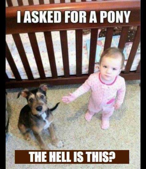 Hilarious Images Hilarious Baby Photos Babamail