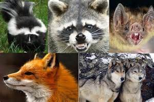 Animals with Rabies