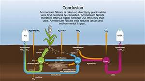Nitrogen Cycle In The Soil