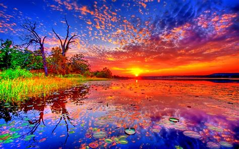 Sunsets: Lake Lotus Sky Clouds Reflection Forest Beautiful ...