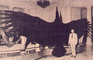 Argentavis magnificens largest flying bird ever discovered
