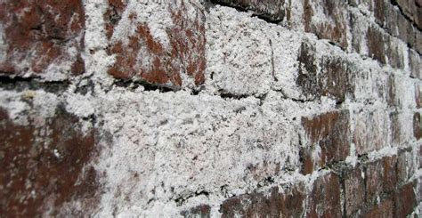 efflorescence  white mold ohio state waterproofing