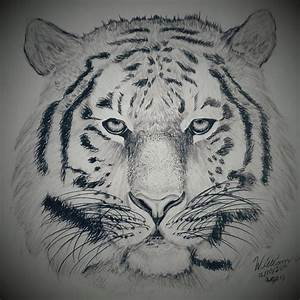 Tiger pencil drawing by dubz002 on DeviantArt