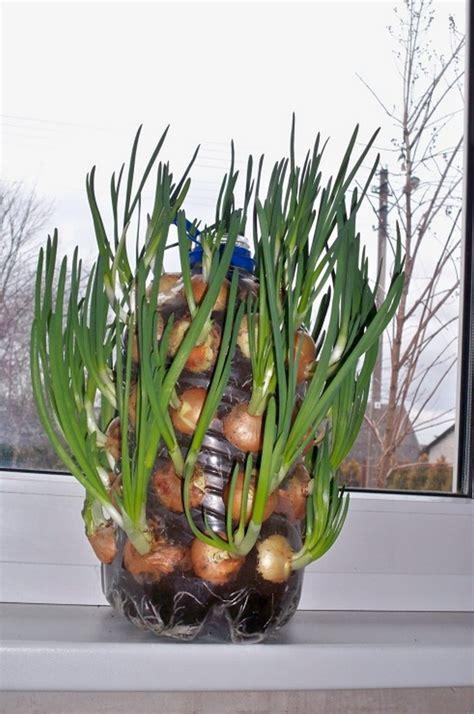 diy vertical onion planter  owner builder network