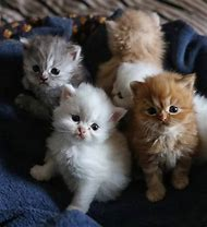 Really Cute Cats and Kittens