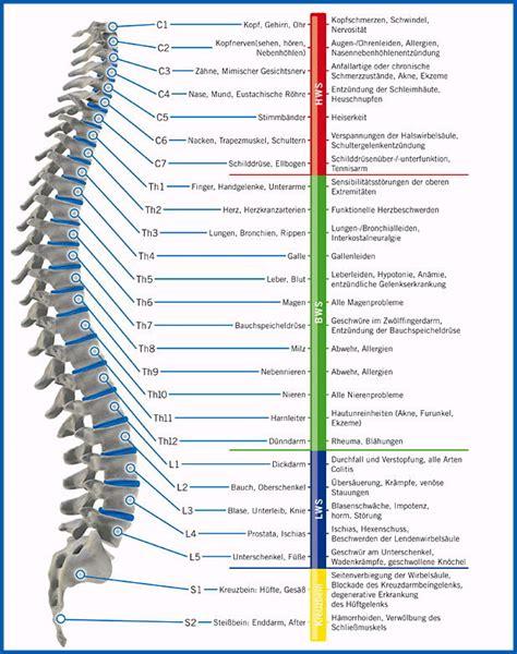artrose rugwervels