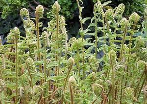 Pflanzen Für Nordseite : schattenpflanzen ~ Frokenaadalensverden.com Haus und Dekorationen