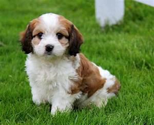 Cute Mixed Dog Breeds | www.pixshark.com - Images ...