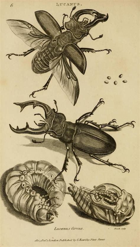general zoology volume vi part  insects george shaw