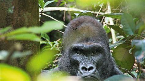republik kongo reiseziele diamir erlebnisreisen