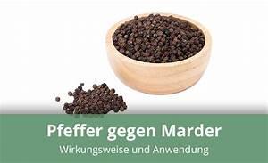 Marder Vom Auto Fernhalten : ist pfeffer gegen marder als hausmittel geeignet alles wissenswerte ~ Frokenaadalensverden.com Haus und Dekorationen