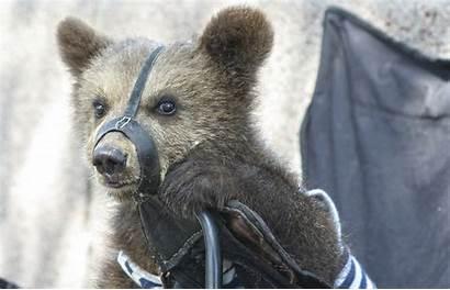 Animals Russia Russian Wild Abused Blockchain Sanctuary