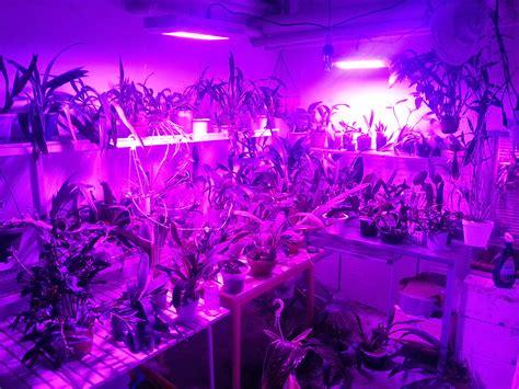 led plant lights spectrum led grow lights grow indoors autos post