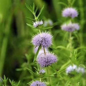 Pflanzkörbe Für Blumenzwiebeln : naturagart shop preslie online kaufen ~ Lizthompson.info Haus und Dekorationen