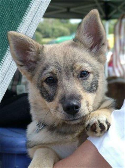 images  lovely dog breeds  pinterest