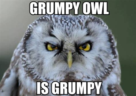 Owl Who Meme - grumpy owl meme