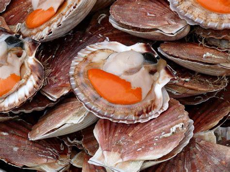cuisiner le corail des coquilles jacques recettes de jacques et de safran