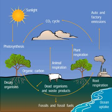 biogeochemical cycles ucar center  science education