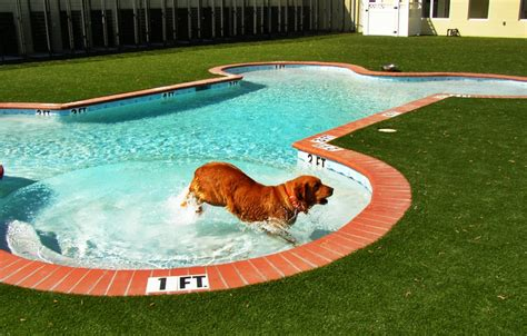 Summery Swimming Pools With The Most Unusual Shapes Dog