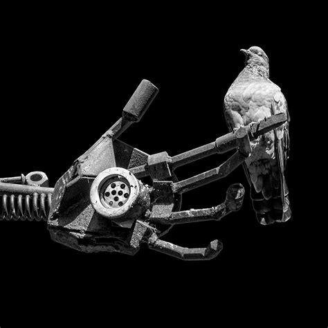 skats no augšas / pigeonator lookin' down on ya | lens used … | Flickr