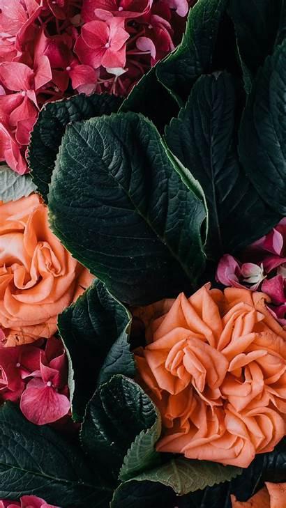 Iphone Floral Flower Wallpapers Orange Retro Roses