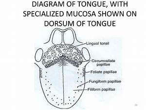 Ppt - Oral Mucous Membrane Powerpoint Presentation
