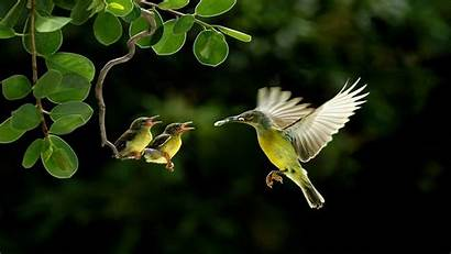 Birds Lovely Wallpapers Hdnicewallpapers Phone Wallpapertag
